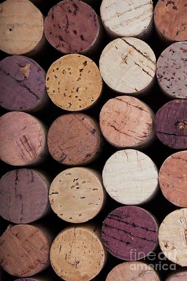 Alcohol Photograph - Wine Corks 1 by Jane Rix