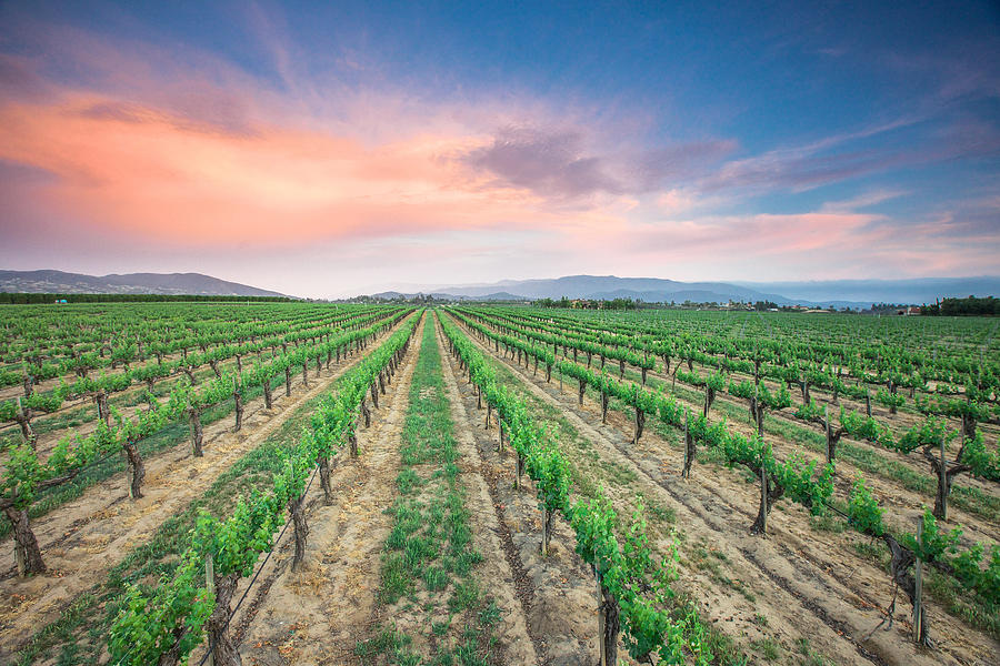 Vineyard Photograph - Wine Country by Robert  Aycock