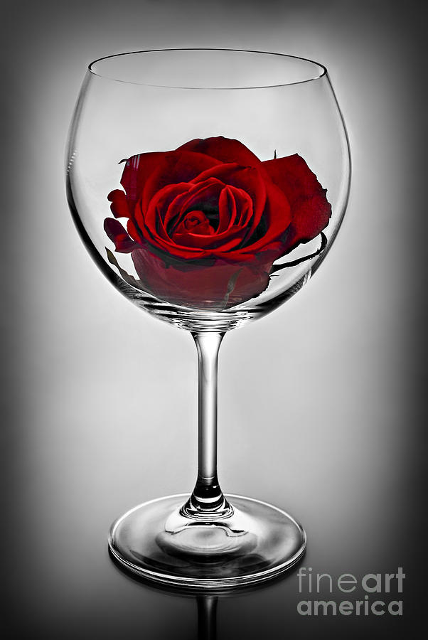 Wine Glass With Rose Photograph