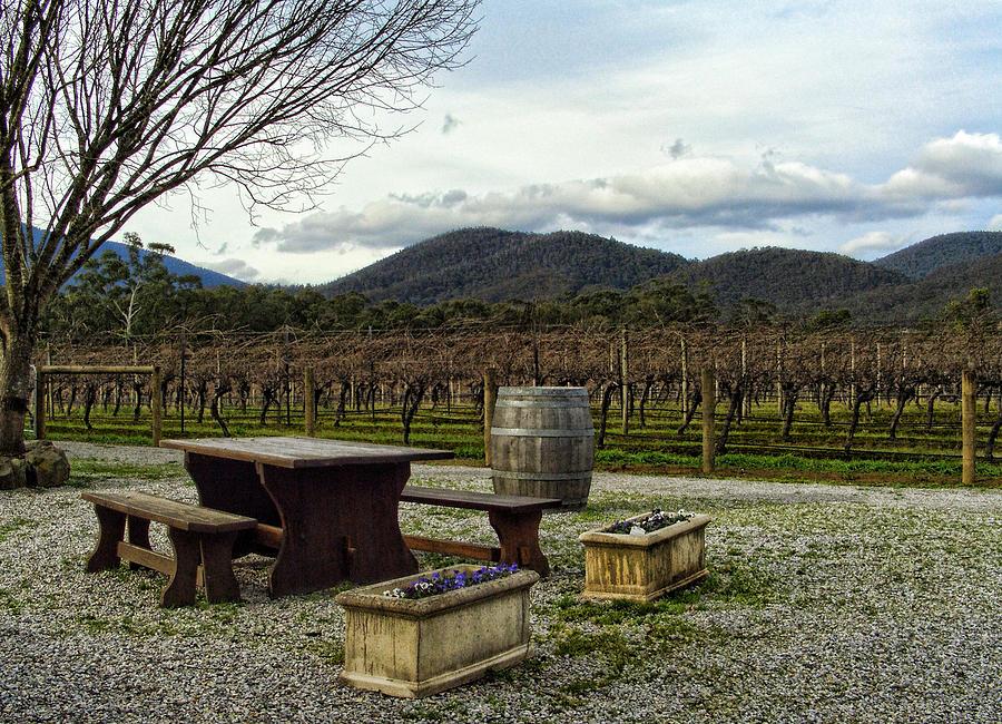 Wine Yard Photograph - Wine Yard by Sanjeewa Marasinghe