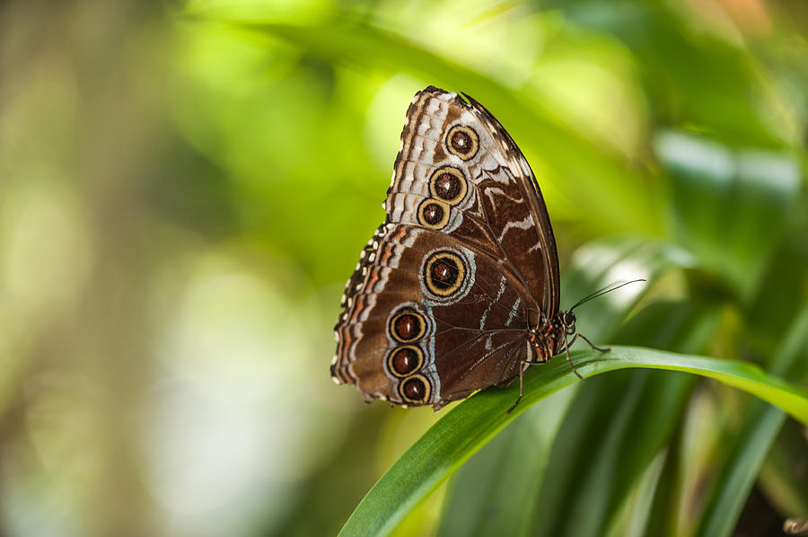 Butterfly Photograph - Winged Circles by Paul Johnson