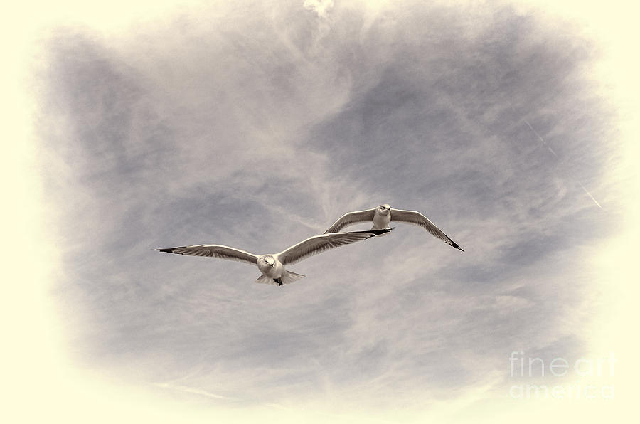 Birds Photograph - Wingman by Joe McCormack Jr