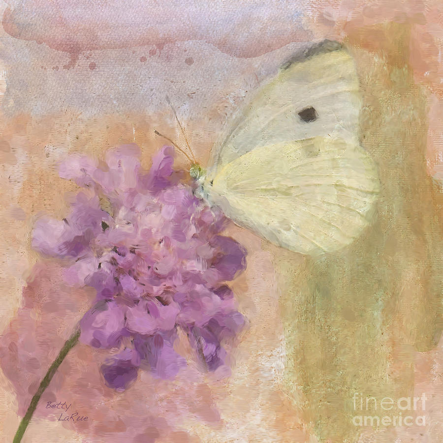 Cabbage White Butterfly Photograph - Wings Of Beauty by Betty LaRue