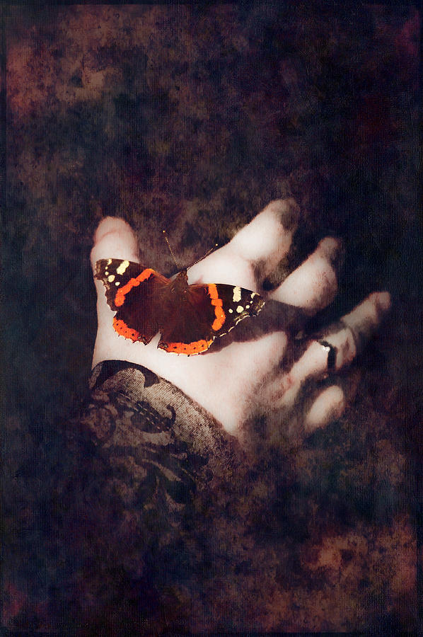 Butterfly Photograph - Wings of Hope by Loriental Photography