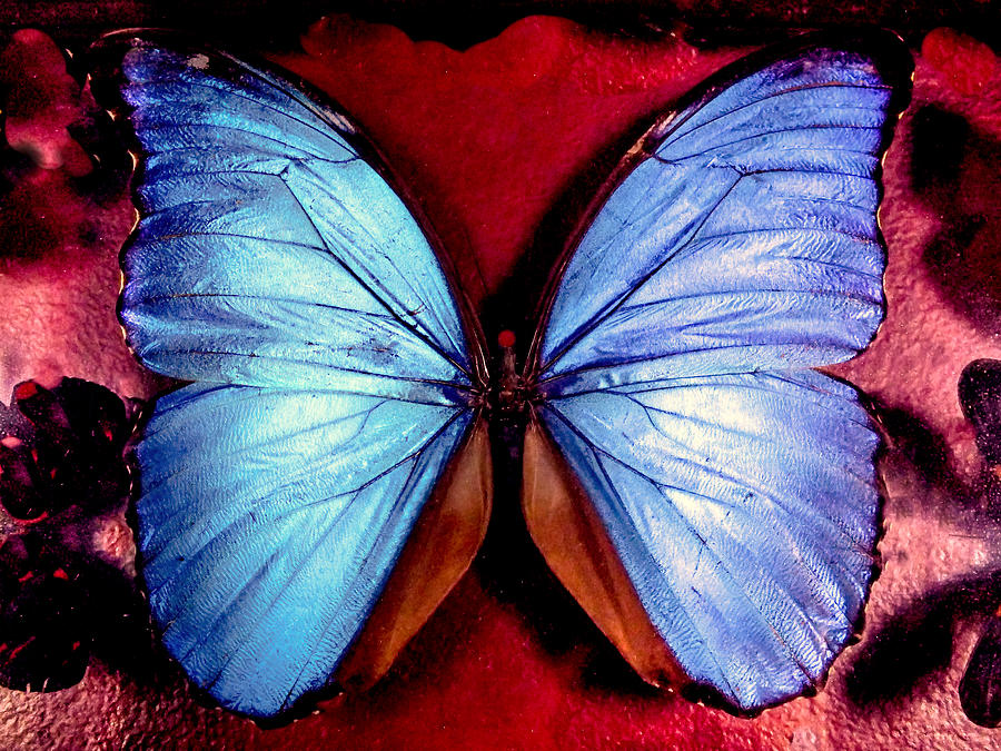 Blue Butterflies Photograph - Wings Of Nature by Karen Wiles