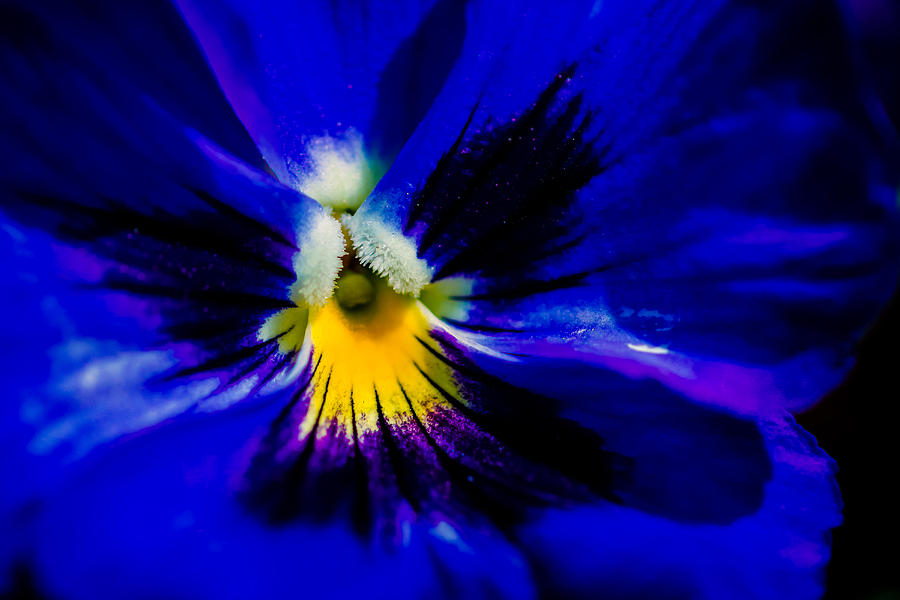 Flower Photograph - Wings Of The Night by Alexander Senin