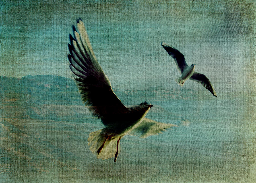 Coastline Digital Art - Wings Over The World by Sarah Vernon