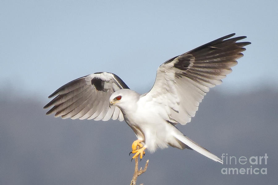 Animal Photograph - Wingspan by Alice Cahill