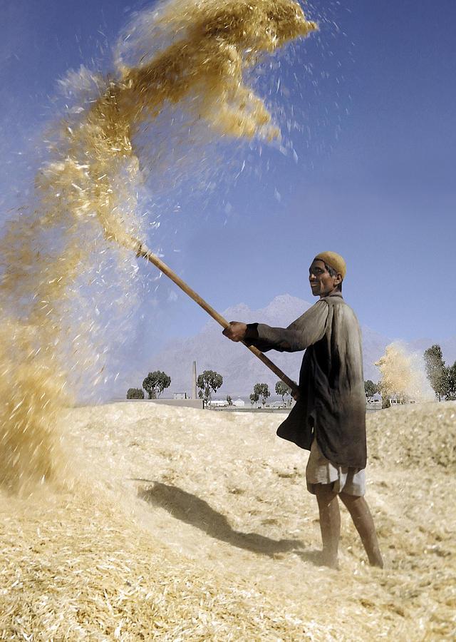 winnowing-wheat-in-iran-david-murphy.jpg
