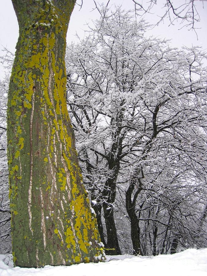 Forest Photograph - Winter  4  by Vassilis Tagoudis