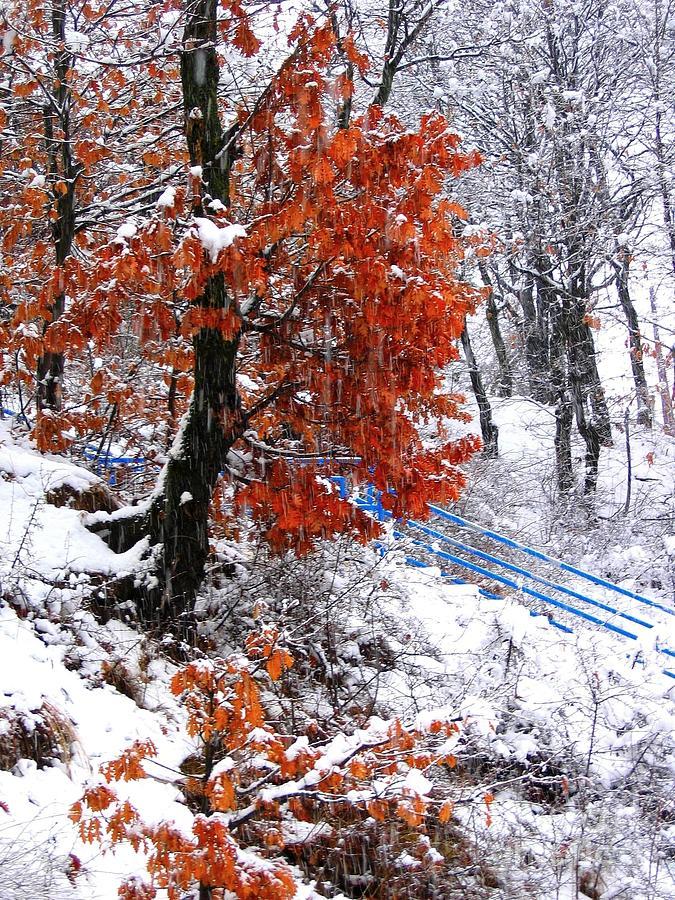 Blue Photograph - Winter 6 by Vassilis Tagoudis