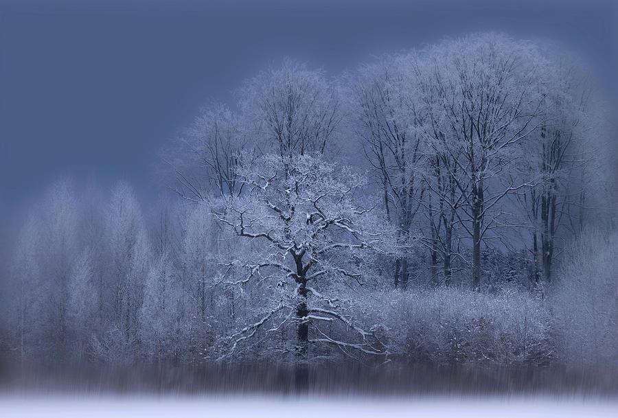 Landscape Photograph - Winter by Allan Wallberg
