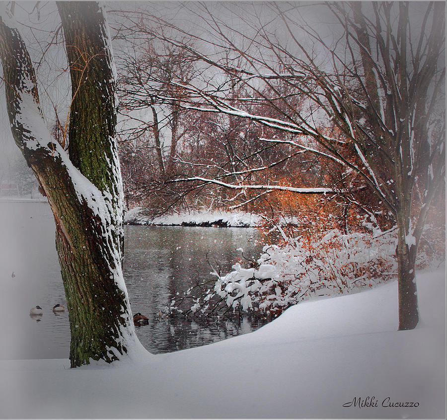 Seasonal Photograph - Winter At The Pond by Mikki Cucuzzo