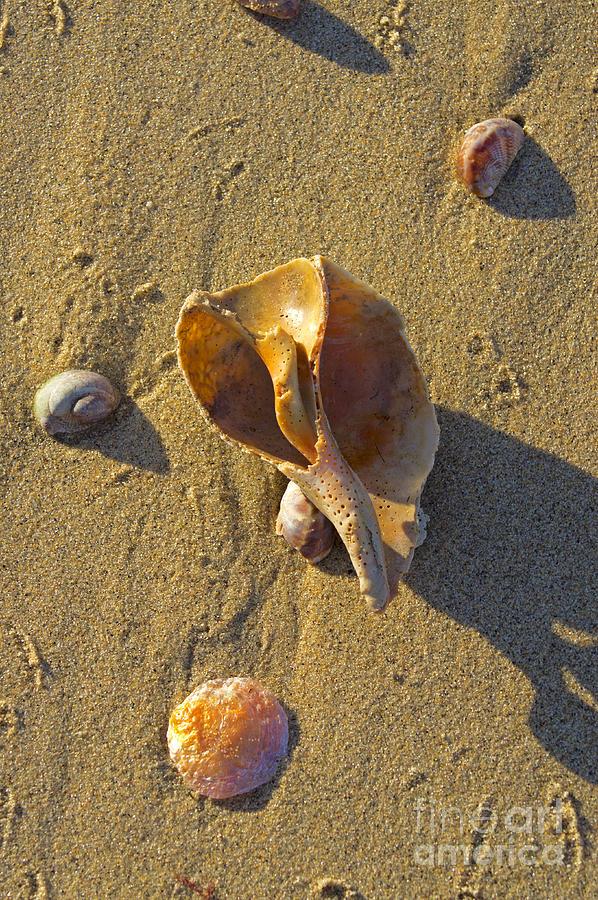 Shell Photograph - Winter Beach by Joe Geraci