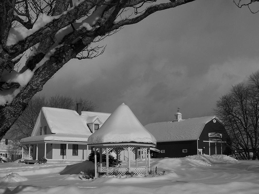 Black & White Photograph - Winter Beauty by Gene Cyr
