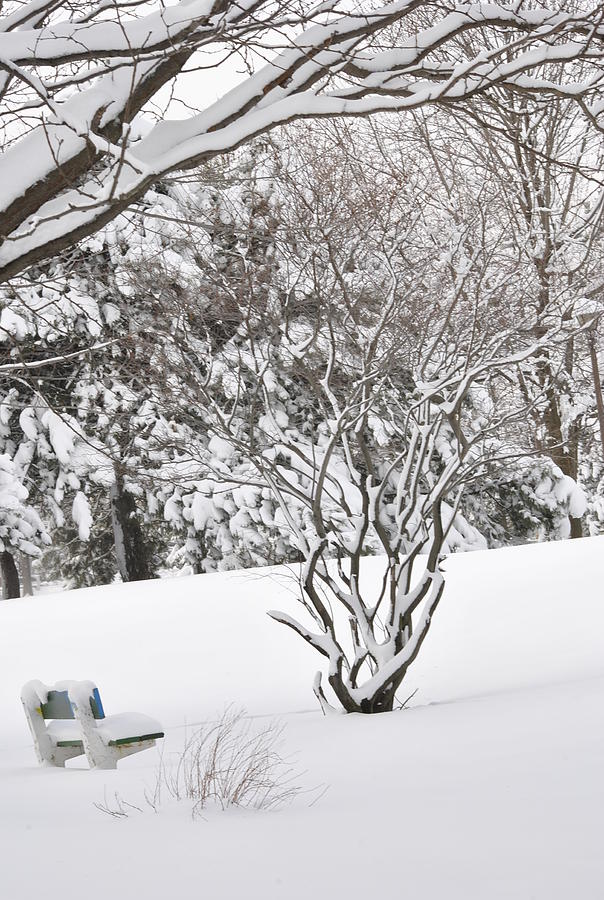 Winter Snow Photograph - Winter Bench by Frederico Borges