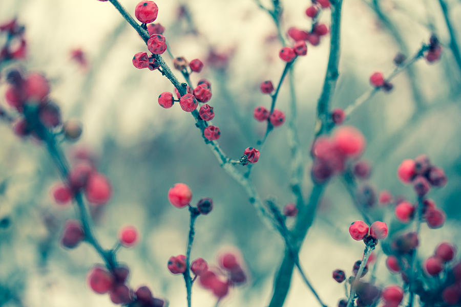 Winter Photograph - Winter Berries by Shane Holsclaw