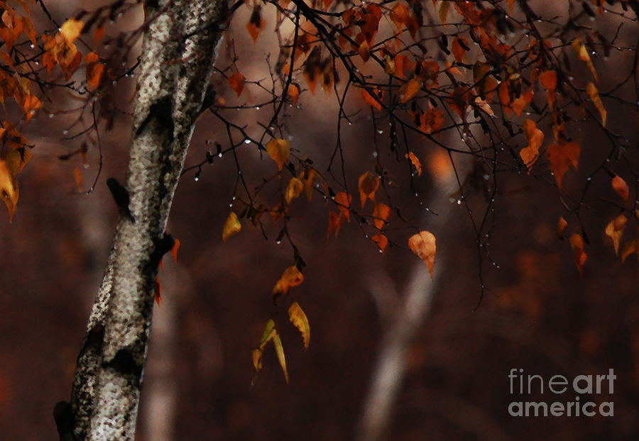 Tree Photograph - Winter Birch by Linda Shafer