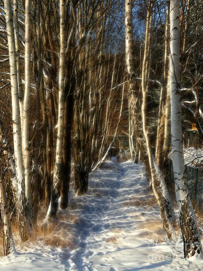 Baar Photograph - Winter Birches by Lutz Baar