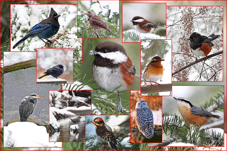 Winter Birds Collage Photograph By Peggy Collins
