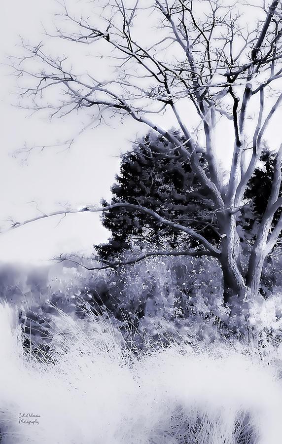 Winter Photograph - Winter Blue  by Julie Palencia