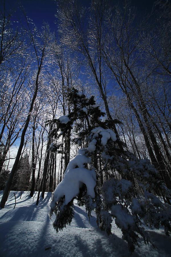 Winter Photograph - Winter Blue by Karol Livote