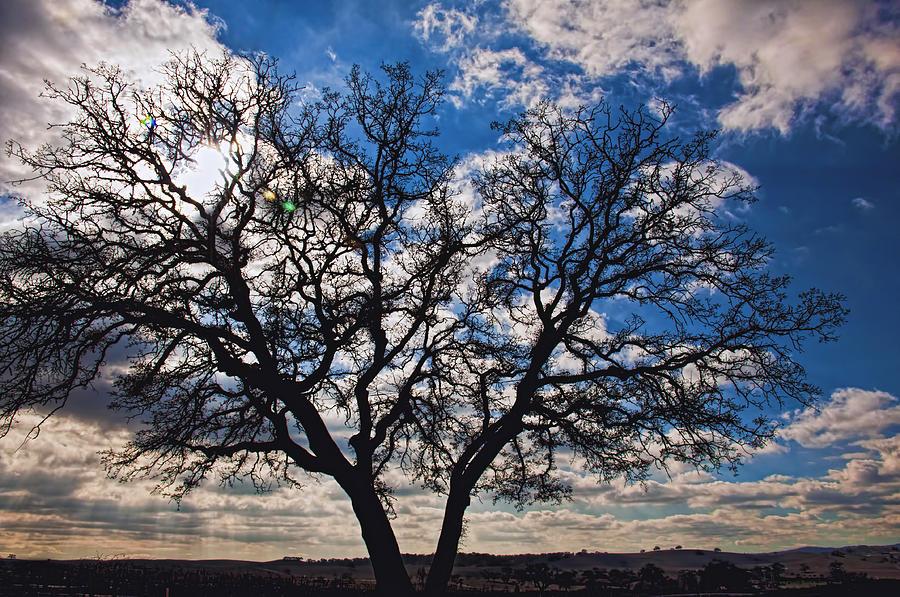 Landscape Photograph - Winter Blue Skys by Bill Dodsworth