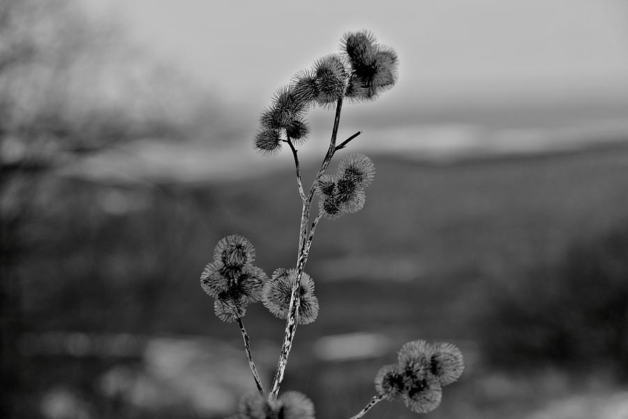B&w Photograph - Winter Boogers by Jahred Allen