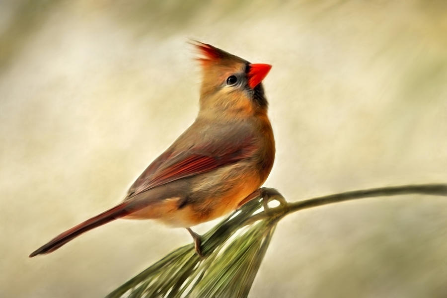 Winter Painting - Winter Cardinal by Christina Rollo