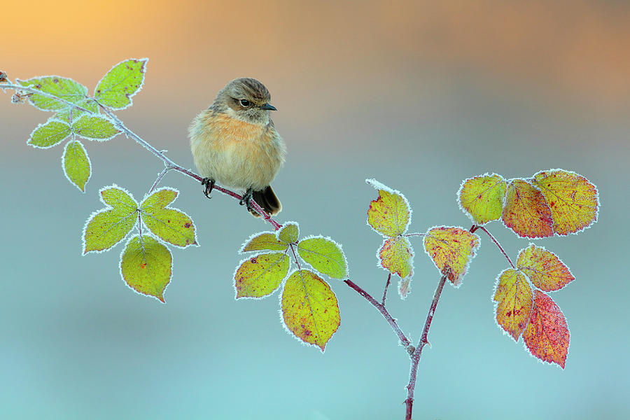 Stonechat Photograph - Winter Colors by Andres Miguel Dominguez