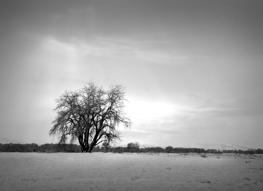 Unique Photograph - Winter Cottonwood 2 by Roger Snyder