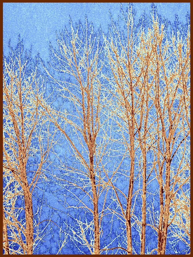 Winter Cottonwoods Abstract Digital Art - Winter Cottonwoods Abstract by Will Borden