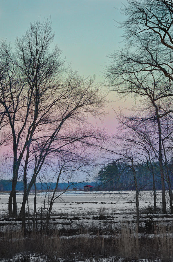 Winter Photograph - Winter Cranberry Bog #1 by Beth Sawickie