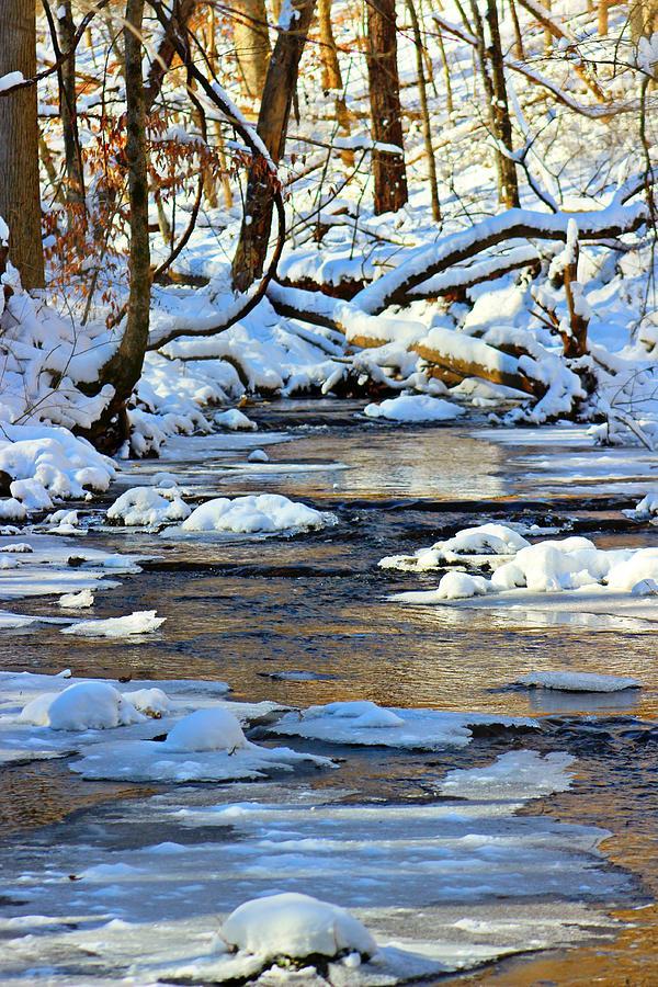Winter Photograph - Winter Creek by Candice Trimble