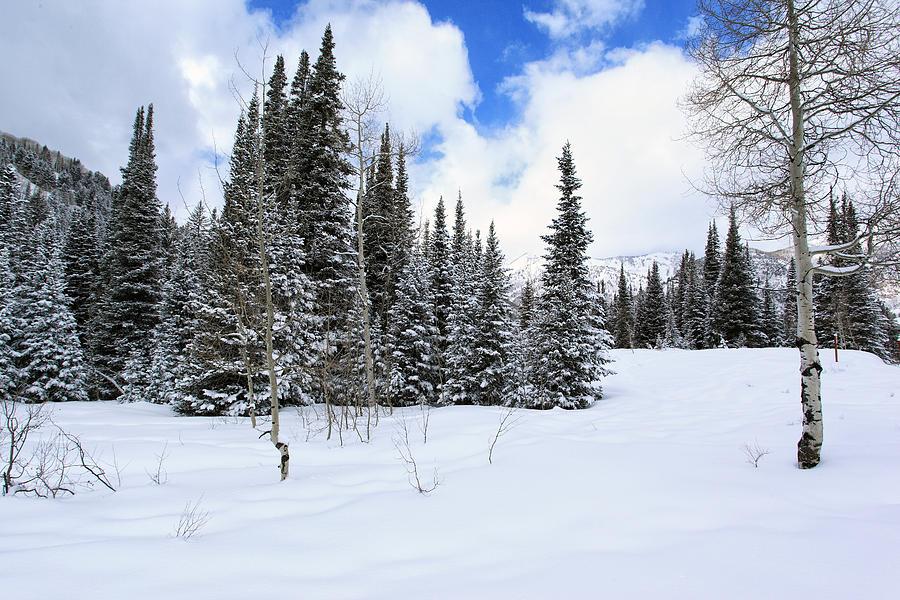 Snow Photograph - Winter by Darryl Wilkinson