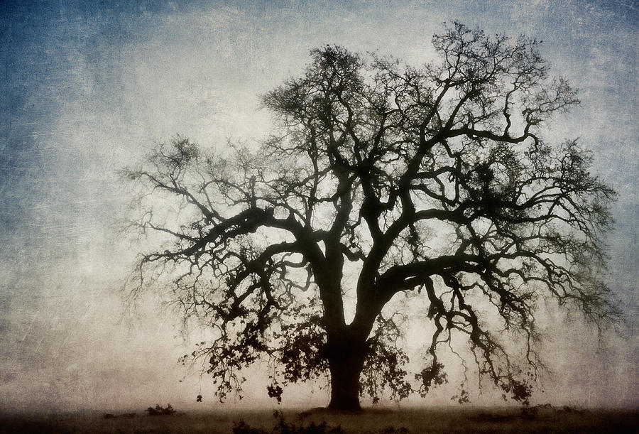 Tree Photograph - Winter Dawn Tree Silhouette by Carol Leigh