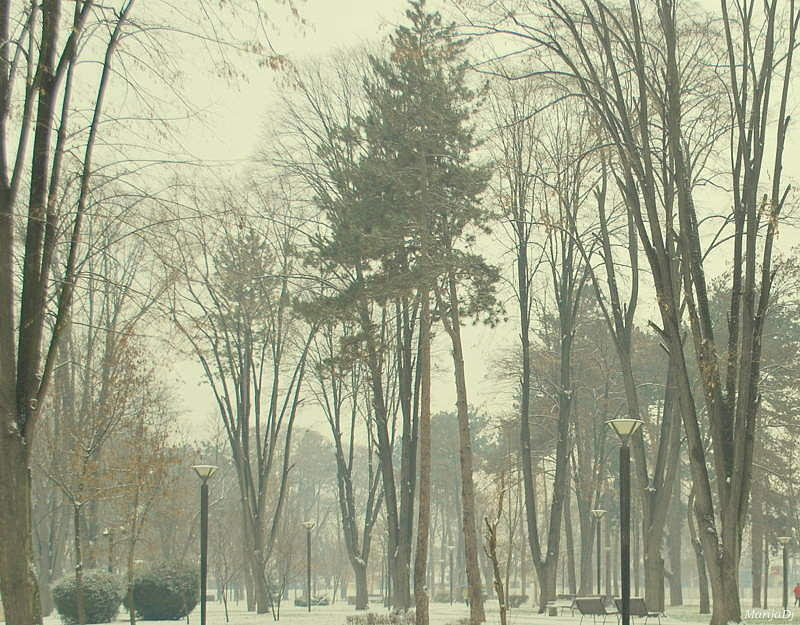 Nature Photograph - Winter Day by Marija Djedovic