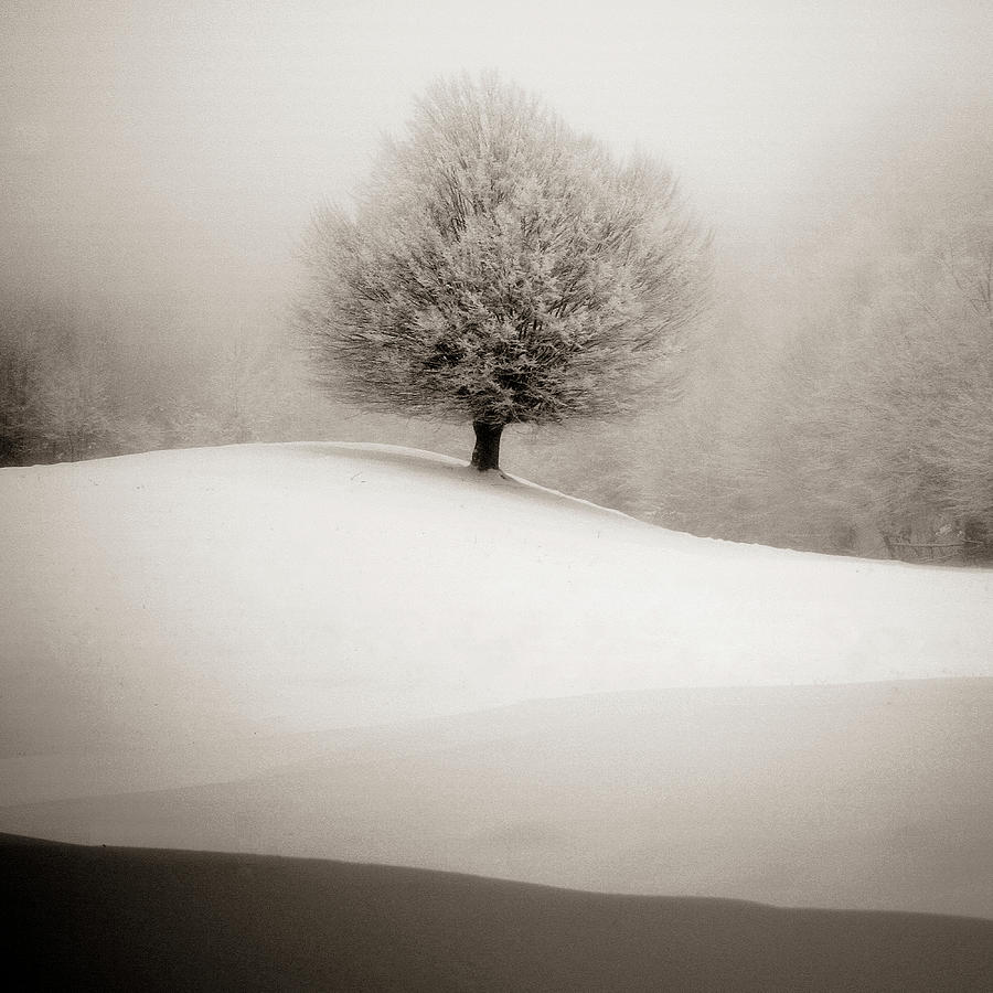 Winter Photograph - Winter Degradee by