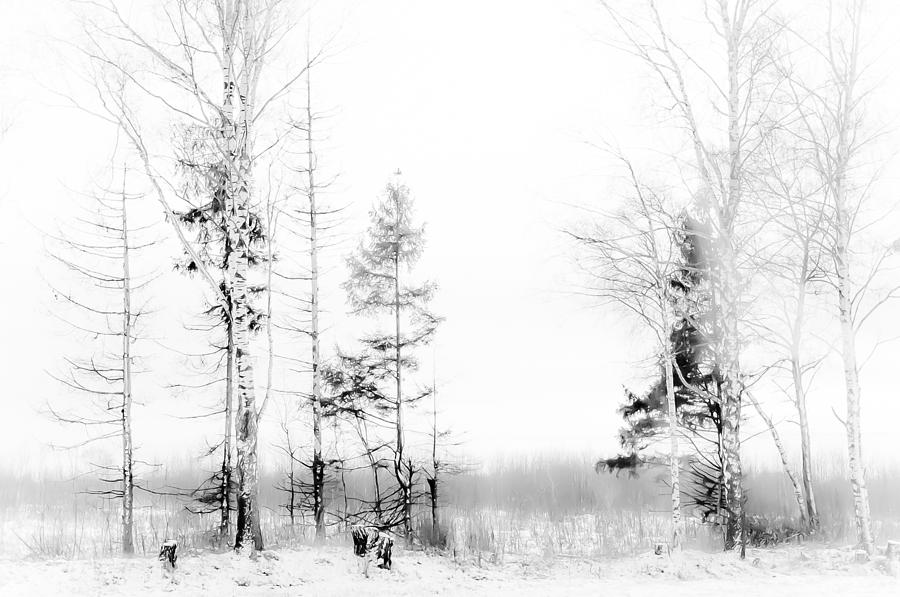Winter Photograph - Winter Drawing by Jenny Rainbow