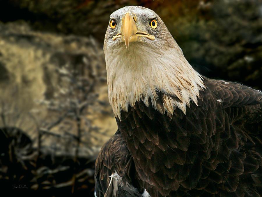 Eagle Photograph - Winter Eagle by Bob Orsillo
