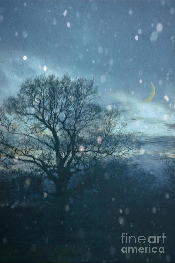 Tree Photograph - Winter Evening by Jan Bickerton