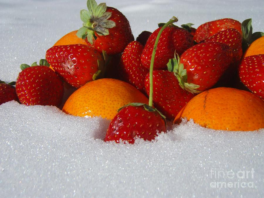 Winter Photograph - Winter Feast by Kristine Nora