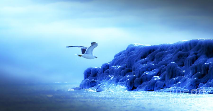 Gulls Photograph - Winter Flight by Angel Martinez