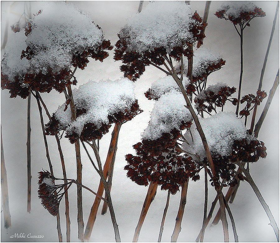 Seasonal Photograph - Winter Flowers by Mikki Cucuzzo