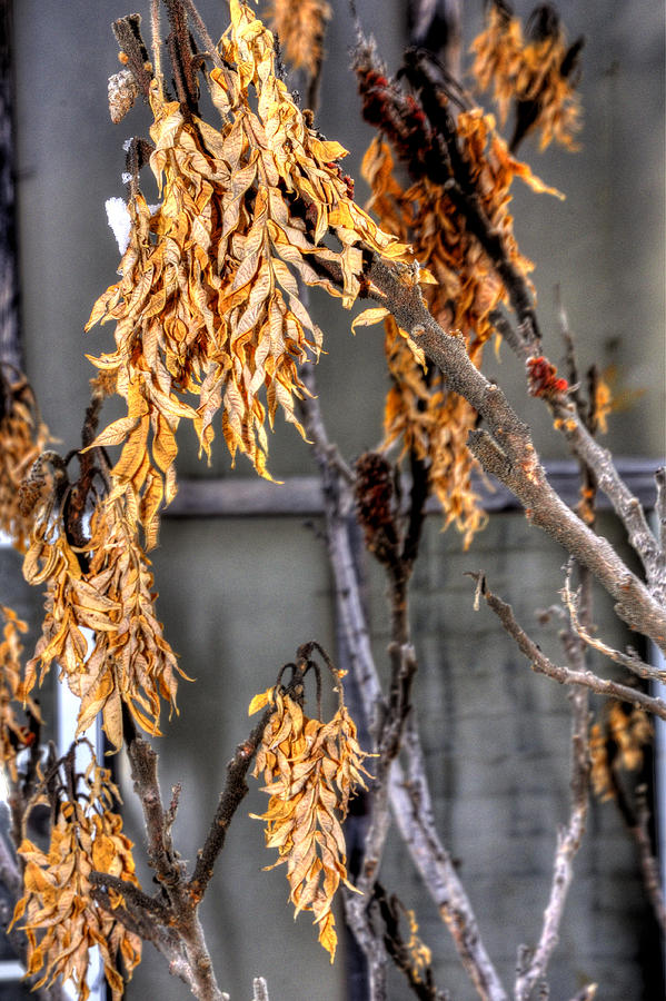Winter Foliage Old House 13126 Photograph