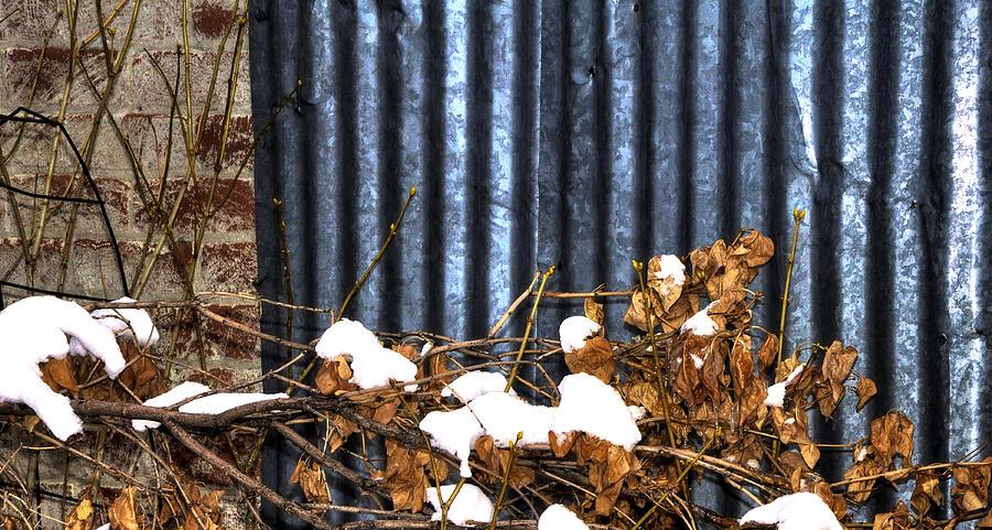 Winter Foliage Snow 13156 Photograph