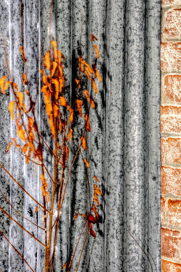 Winter Foliage Tin 13134 Photograph