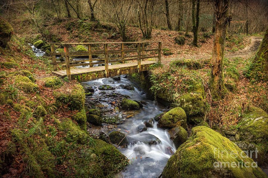 Autumnal Photograph - Winter Footbridge by Adrian Evans