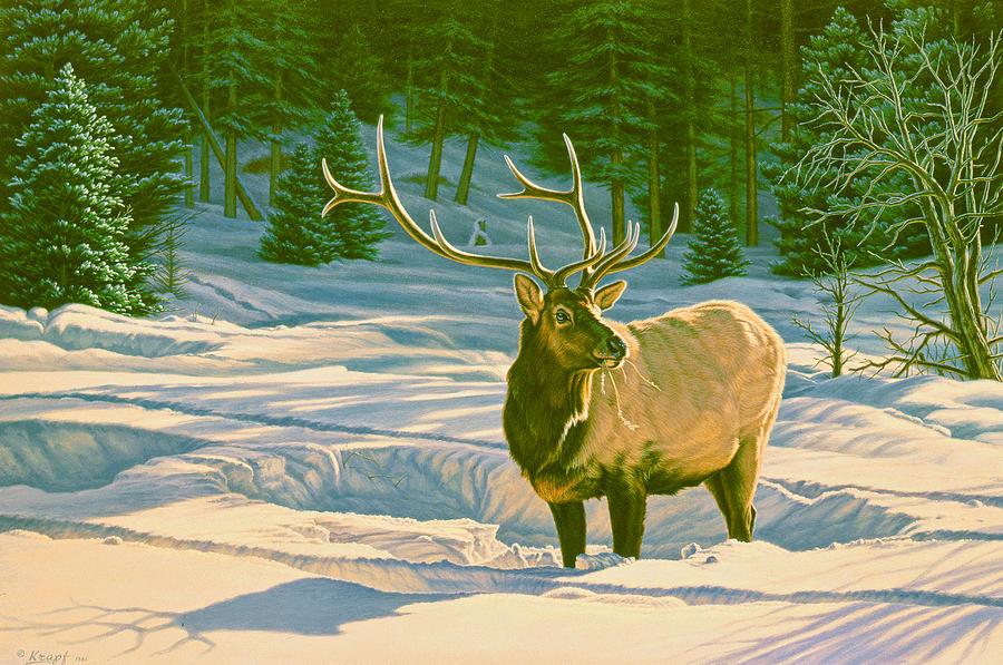 Wildlife Painting - Winter Forage - Elk by Paul Krapf
