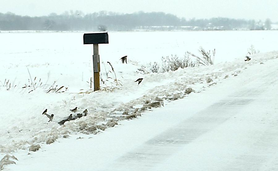 Winter Scenes Photograph - Winter Foragers by Julie Dant